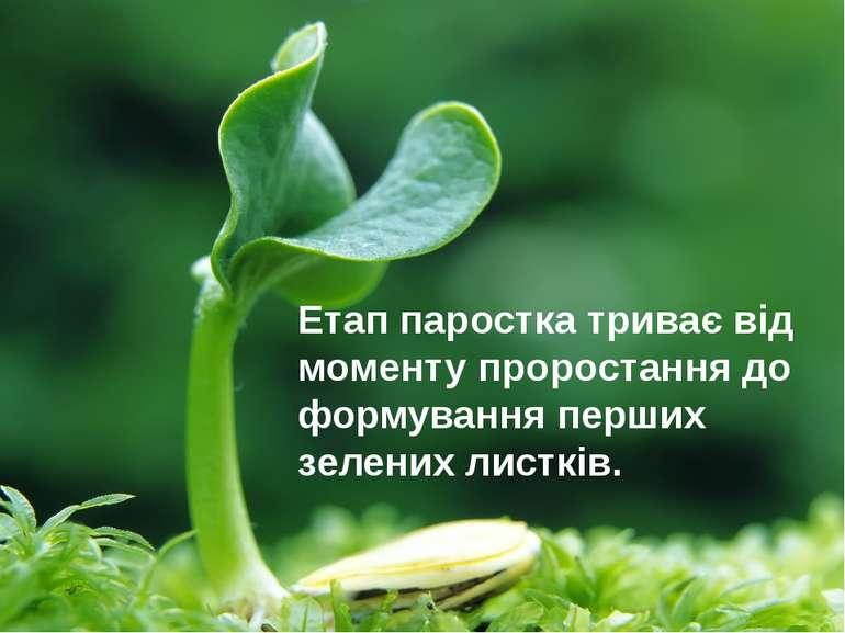 Етап паростка триває від моменту проростання до формування перших зелених лис...