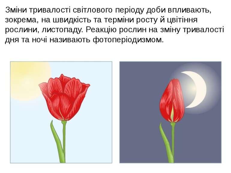 Зміни тривалості світлового періоду доби впливають, зокрема, на швидкість та ...
