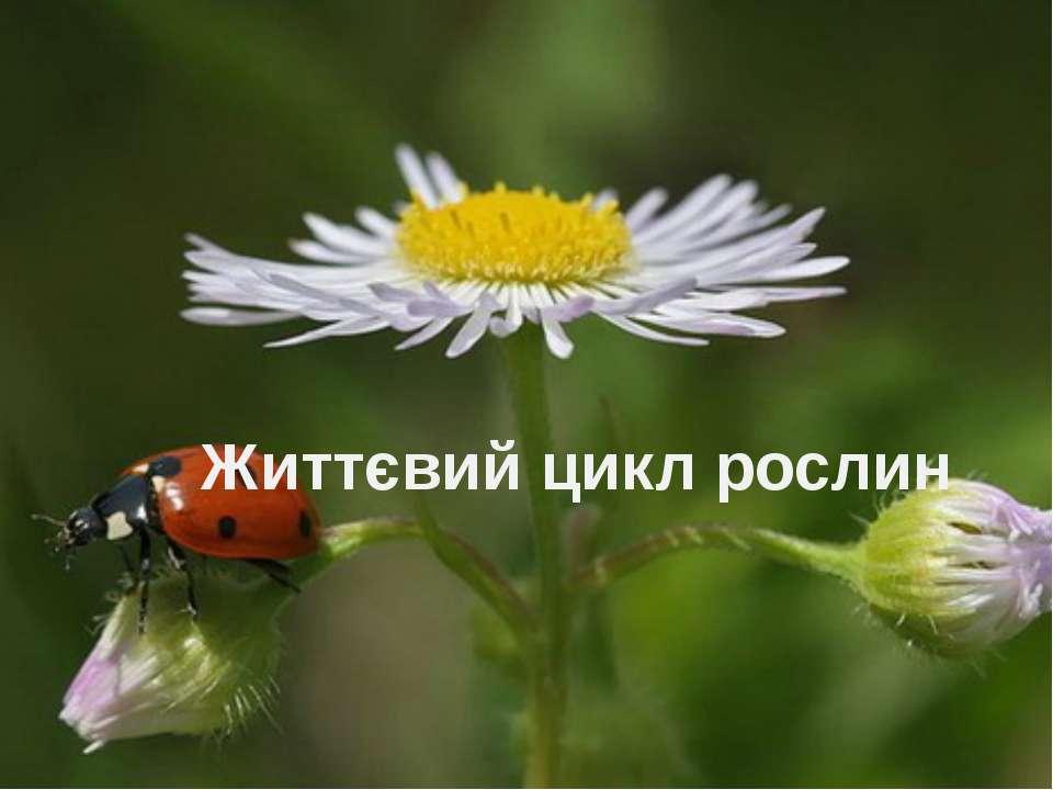 Життєвий цикл рослин