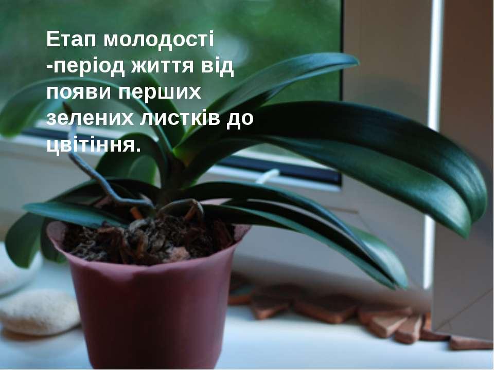 Етап молодості -період життя від появи перших зелених листків до цвітіння.