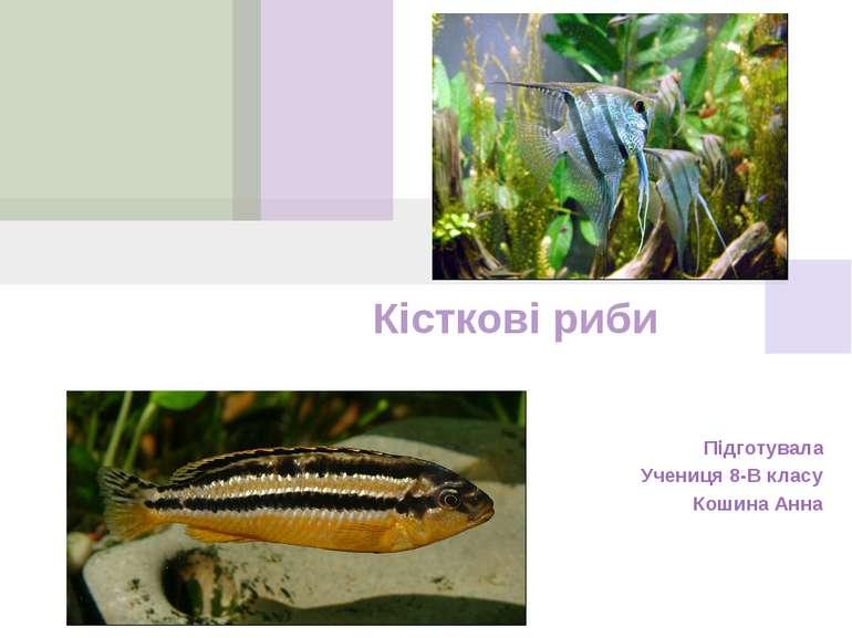 Кісткові риби Підготувала Учениця 8-В класу Кошина Анна