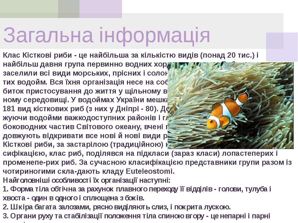 Клас Кісткові риби - це найбільша за кількістю видів (понад 20 тис.) і найбіл...