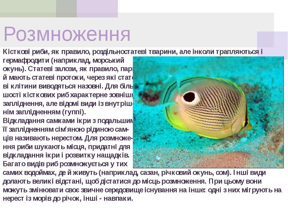 Розмноження Кісткові риби, як правило, роздільностатеві тварини, але інколи т...