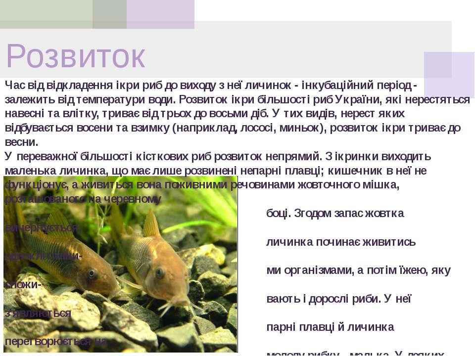 Розвиток Час від відкладення ікри риб до виходу з неї личинок - інкубаційний ...
