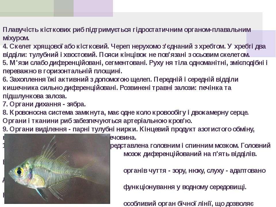 Плавучість кісткових риб підтримується гідростатичним органом-плавальним міху...