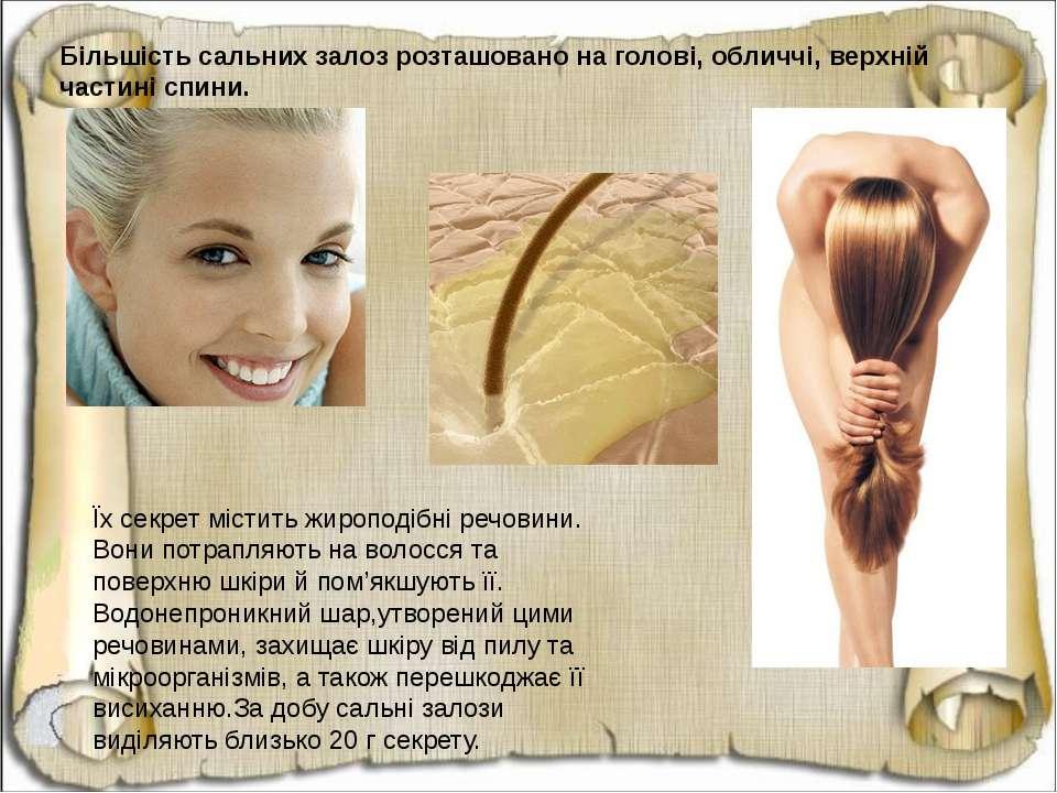 Більшість сальних залоз розташовано на голові, обличчі, верхній частині спини...