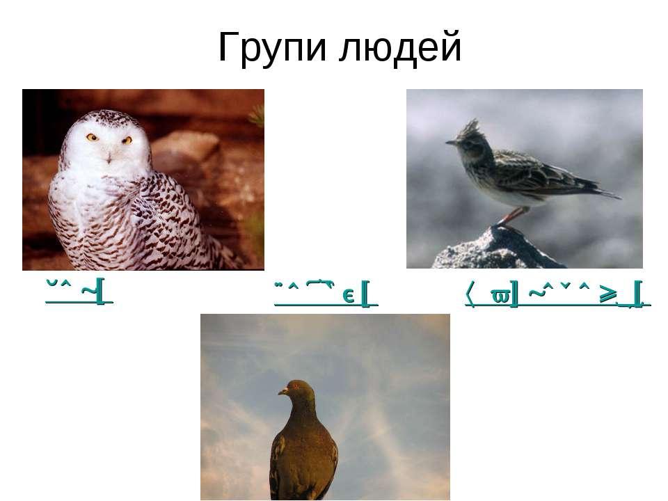 Групи людей жайворонки сови голуби