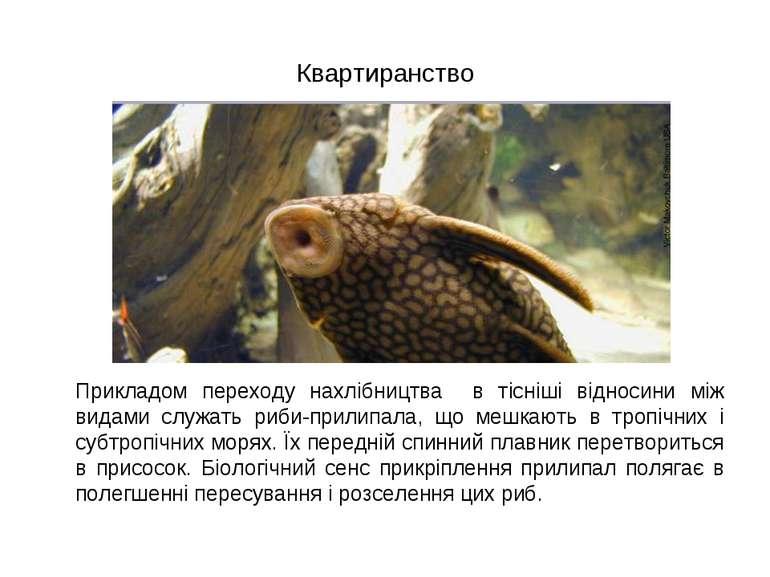 Квартиранство Прикладом переходу нахлібництва в тісніші відносини між видами ...