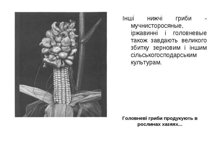 Інші нижчі гриби - мучнисторосяные, іржавинні і головневые також завдають вел...