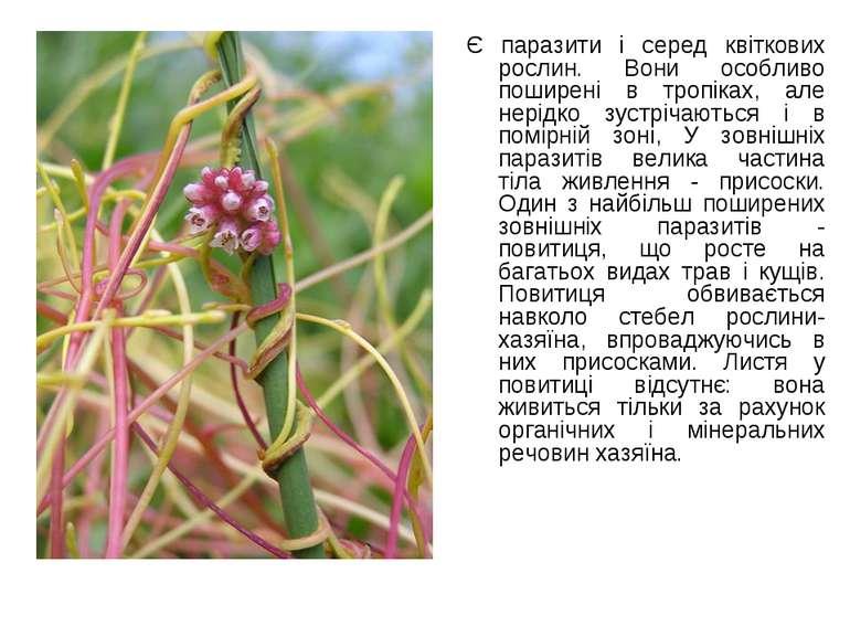 Є паразити і серед квіткових рослин. Вони особливо поширені в тропіках, але н...