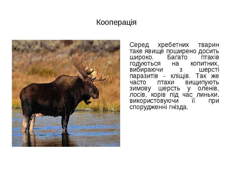 Кооперація Серед хребетних тварин таке явище поширено досить широко. Багато п...