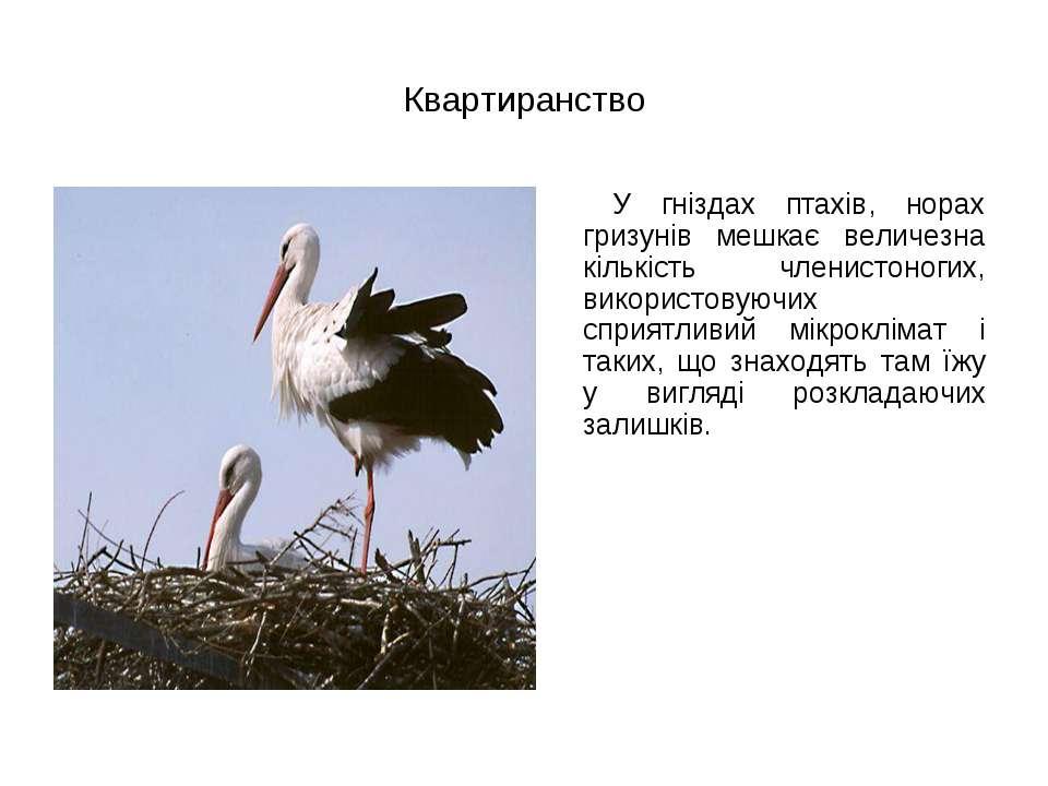 Квартиранство У гніздах птахів, норах гризунів мешкає величезна кількість чле...