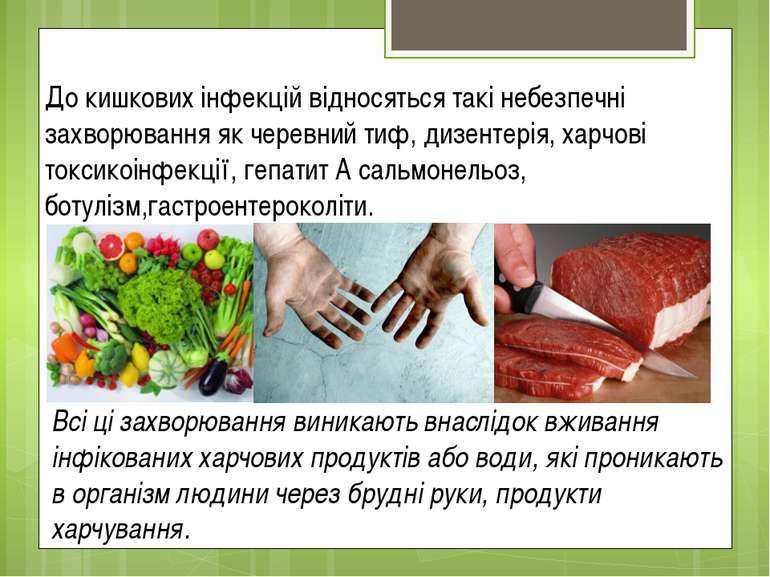 До кишкових інфекцій відносяться такі небезпечні захворювання як черевний тиф...