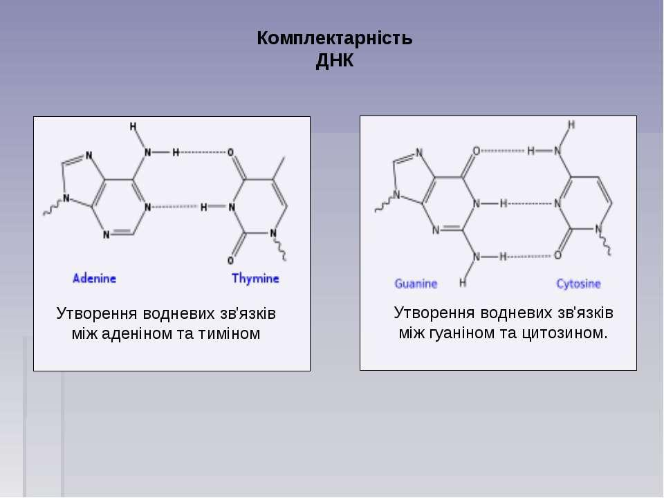Комплектарність ДНК