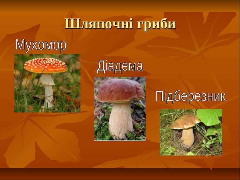 Шляпочні гриби