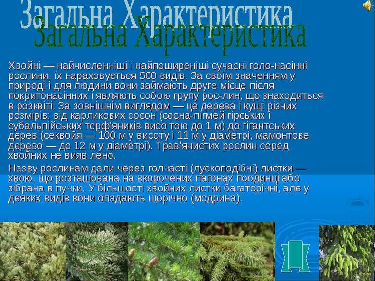 Хвойні — найчисленніші і найпоширеніші сучасні голо насінні рослини, їх нарах...