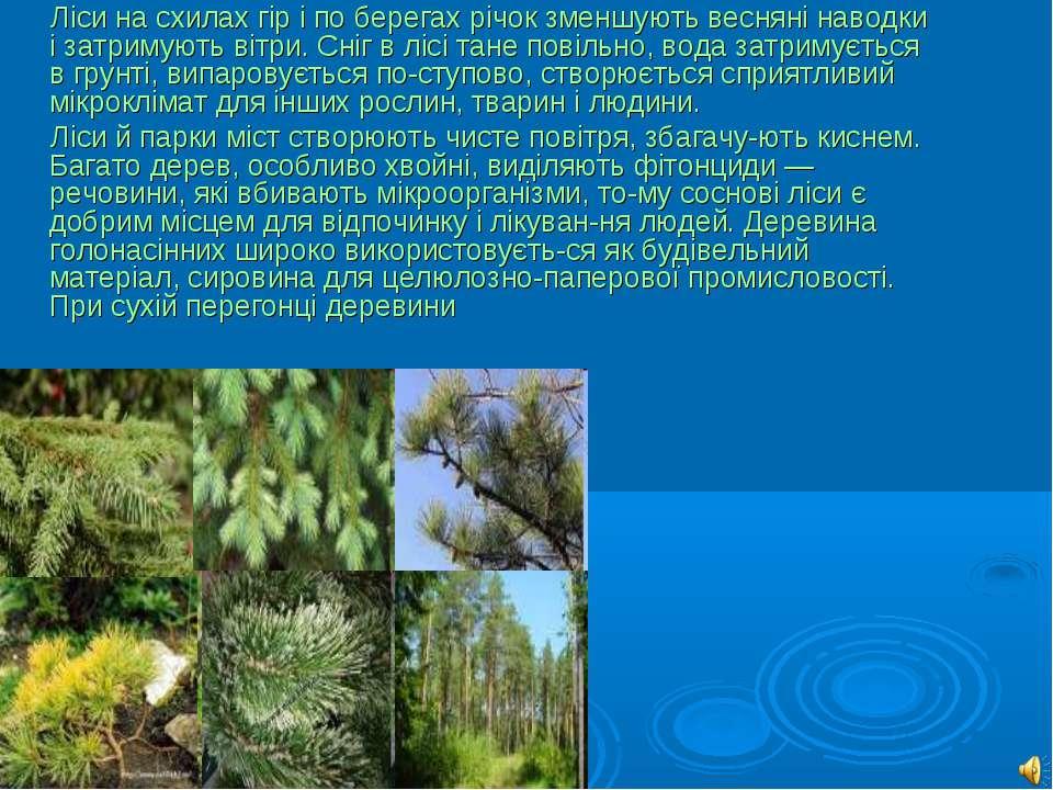 Ліси на схилах гір і по берегах річок зменшують весняні наводки і затримують ...