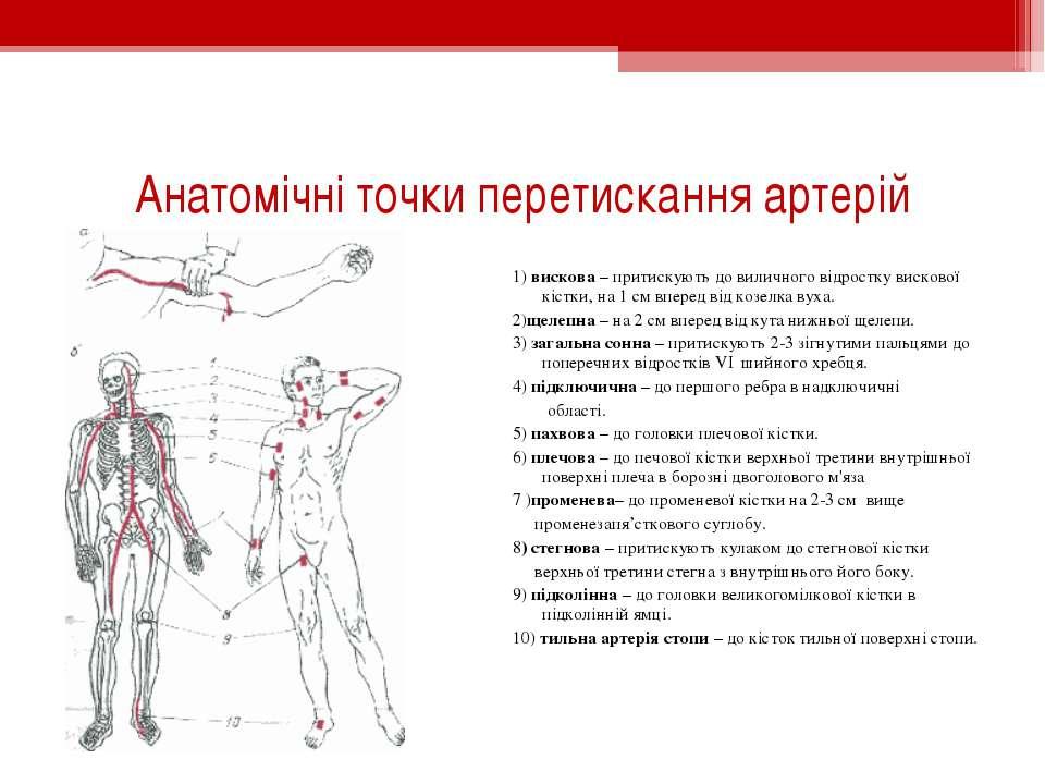 Анатомічні точки перетискання артерій 1) вискова – притискують до виличного в...