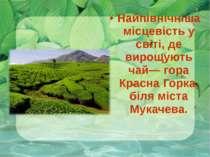 Найпівнічніша місцевість у світі, де вирощують чай— гора Красна Горка, біля м...