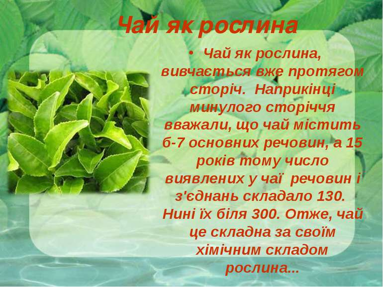 Чай як рослина Чай як рослина, вивчається вже протягом сторіч. Наприкінці мин...