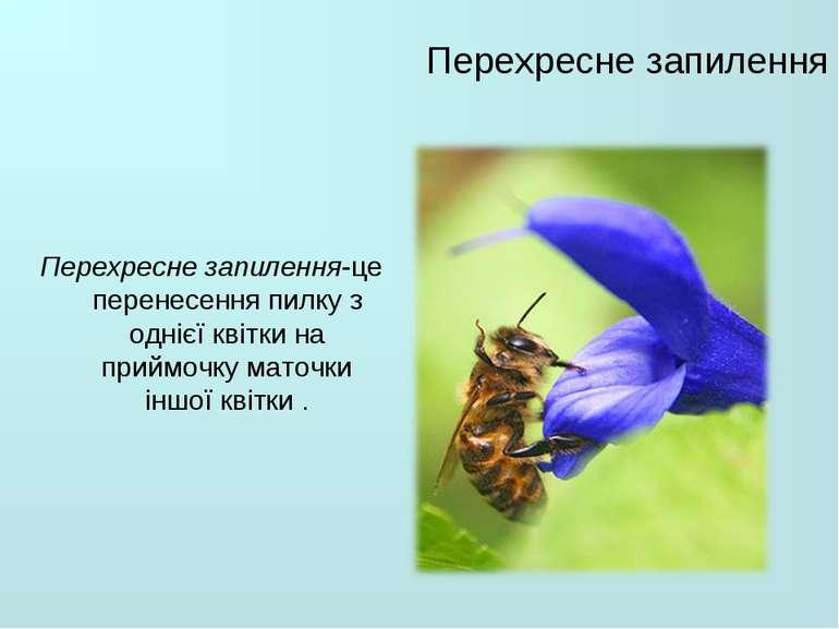 Перехресне запилення Перехресне запилення-це перенесенняпилкуз однієї квітк...