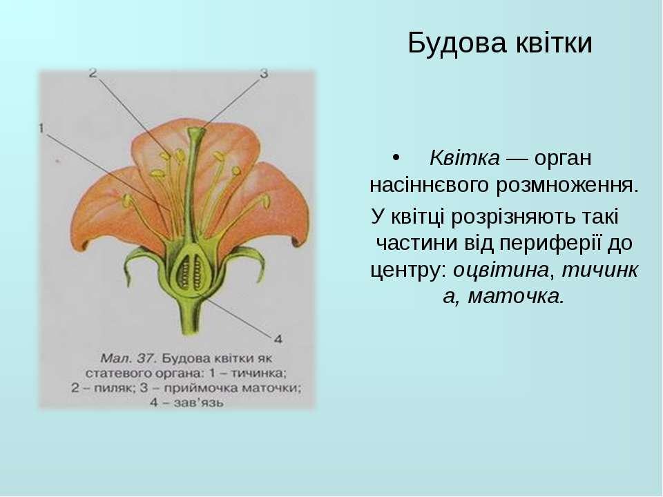 Будова квітки  Квітка— орган насіннєвого розмноження. У квітці розрізняють ...