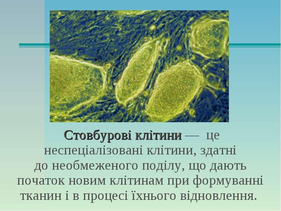 Стовбурові клітини— це неспеціалізовані клітини, здатні донеобмеженого поді...