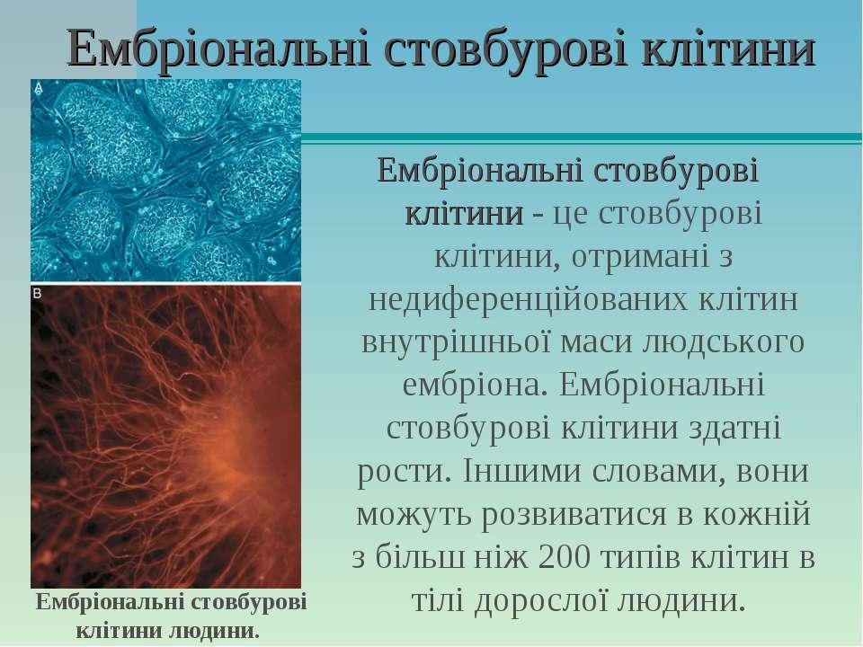 Ембріональні стовбурові клітини Ембріональні стовбурові клітини - це стовбуро...