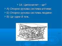 14. Цитоскелет – це? А) Опорно-рухова система клітини; Б) Опорно-рухова систе...