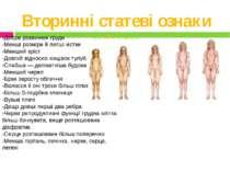 Вторинні статеві ознаки жінок -Добре розвинені груди -Менші розміри й легші к...