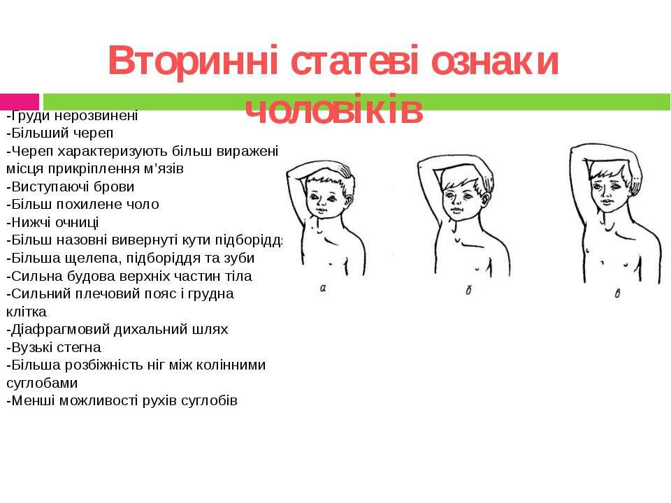 Вторинні статеві ознаки чоловіків -Груди нерозвинені -Більший череп -Череп ха...