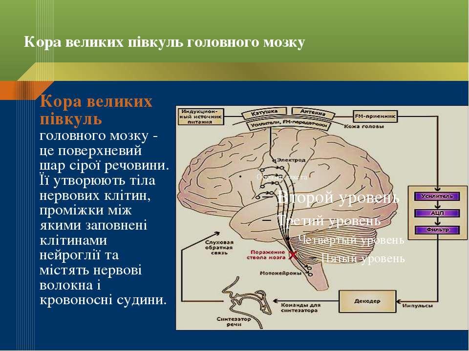Кора великих півкуль головного мозку Кора великих півкуль головного мозку - ц...