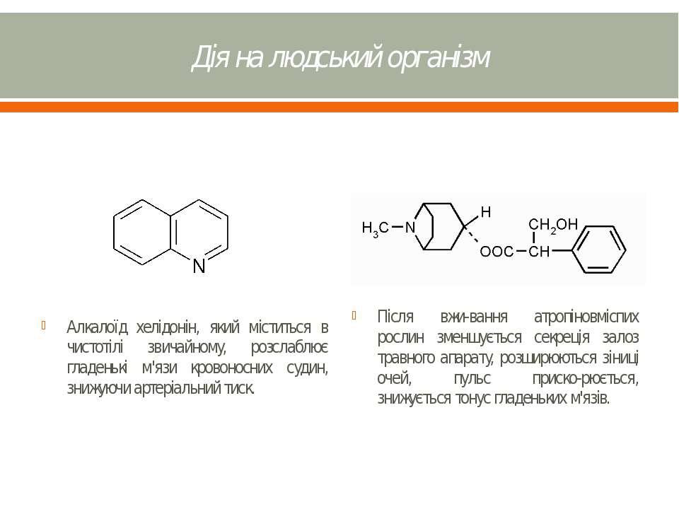 Дія на людський організм Алкалоїд хелідонін, який міститься в чистотілі звича...