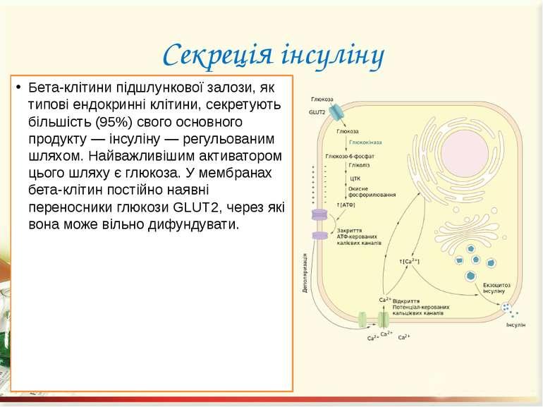 Секреція інсуліну Бета-клітини підшлункової залози, як типові ендокринні кліт...
