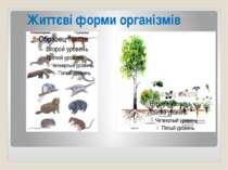 Життєві форми організмів