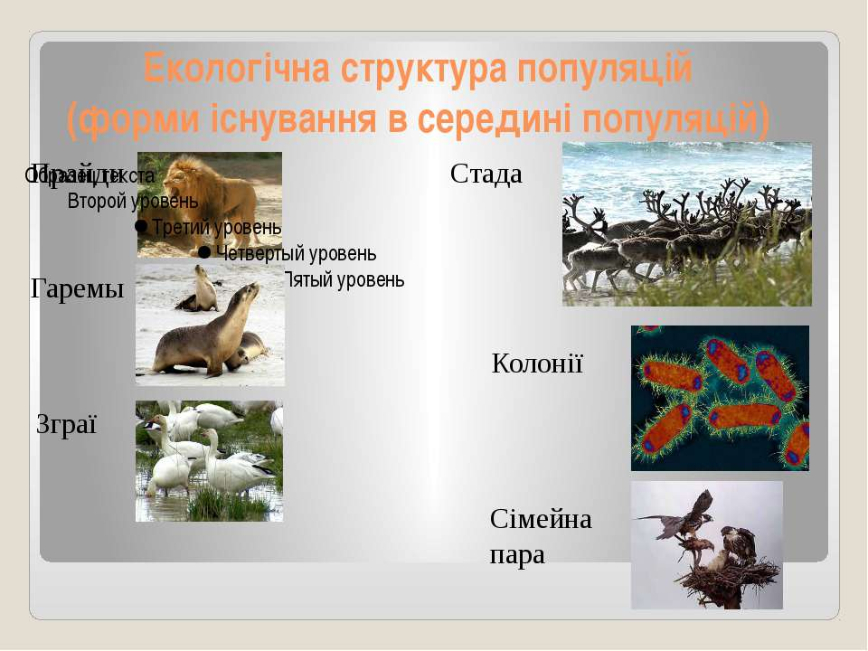 Екологічна структура популяцій (форми існування в середині популяцій) Прайди ...