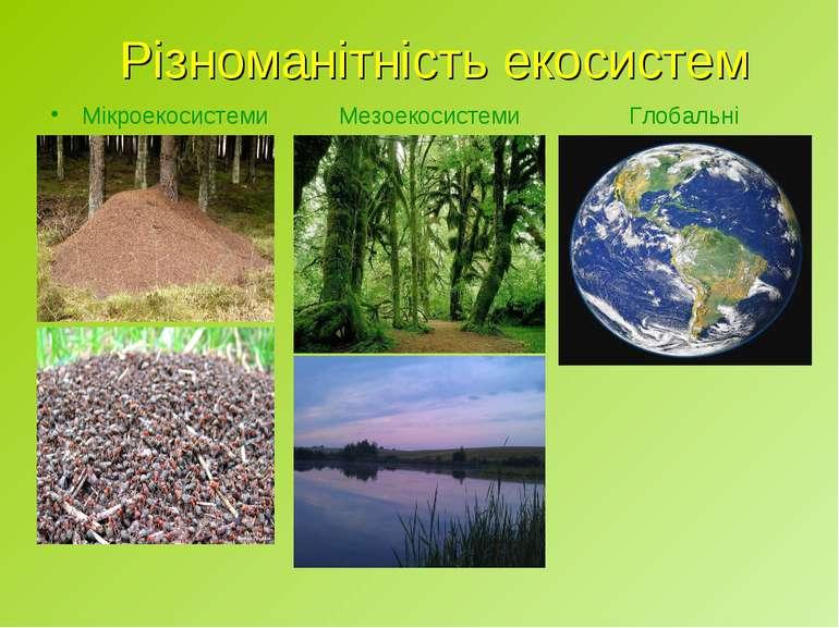 Різноманітність екосистем Мікроекосистеми Мезоекосистеми Глобальні екосистеми