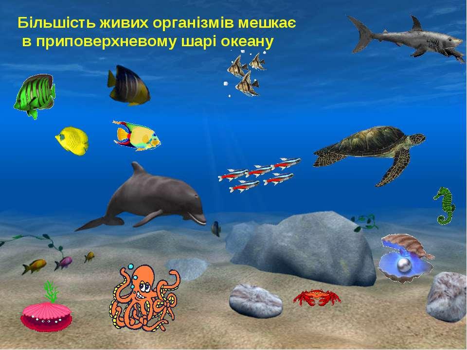 Більшість живих організмів мешкає в приповерхневому шарі океану