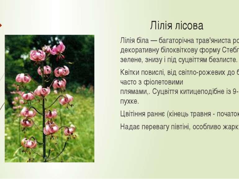 Лілія лісова Лілія біла—багаторічнатрав'яниста рослина.Має декоративну бі...