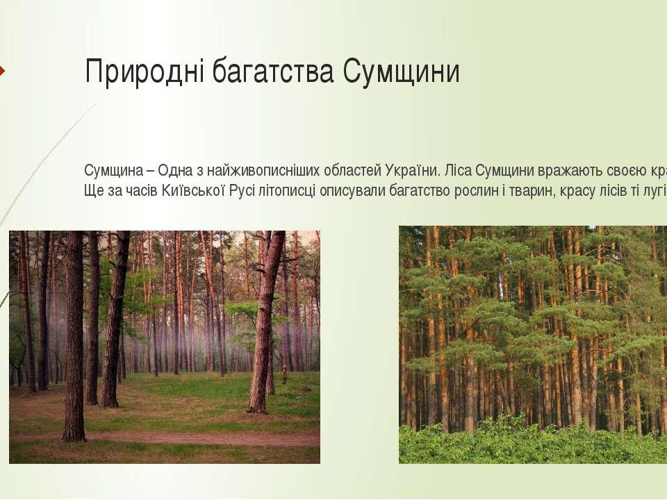 Природні багатства Сумщини Сумщина – Одна з найживописніших областей України....