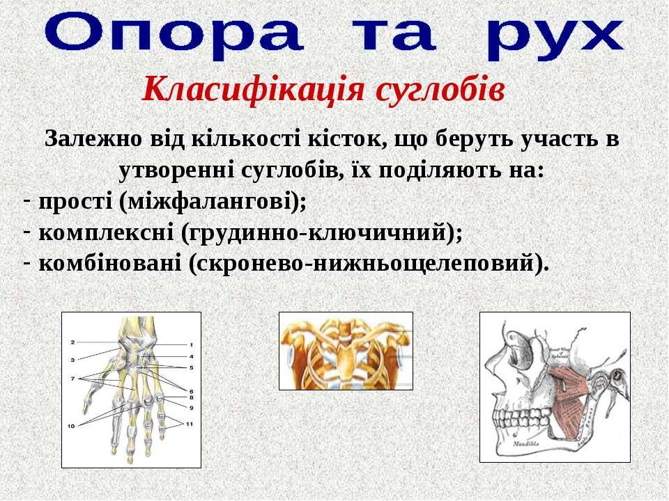 Класифікація суглобів Залежно від кількості кісток, що беруть участь в утворе...