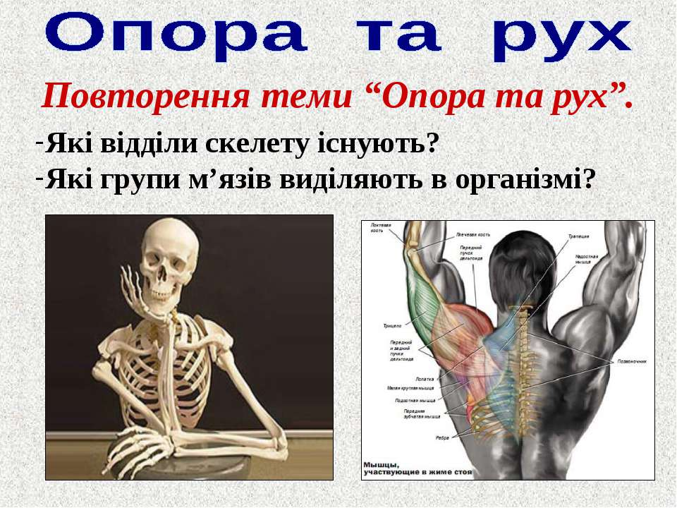 """Повторення теми """"Опора та рух"""". Які відділи скелету існують? Які групи м'язів..."""