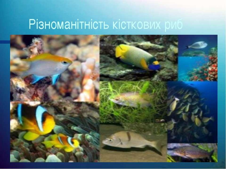 Різноманітність кісткових риб