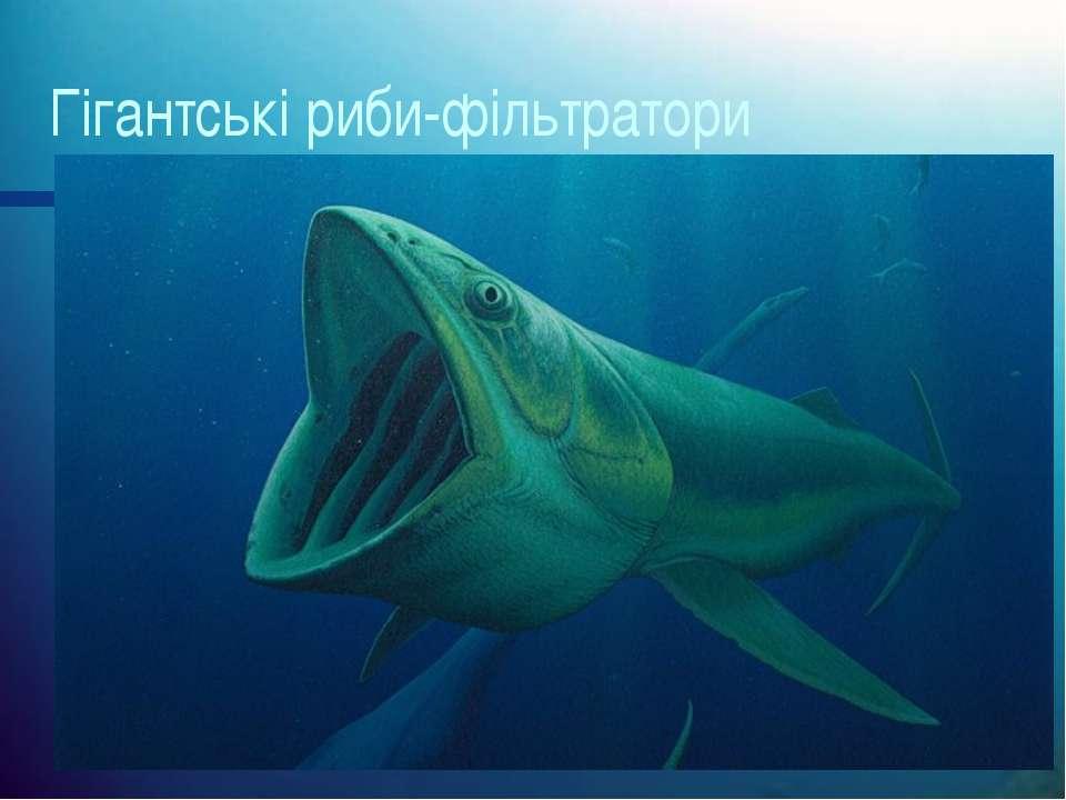 Гігантські риби-фільтратори