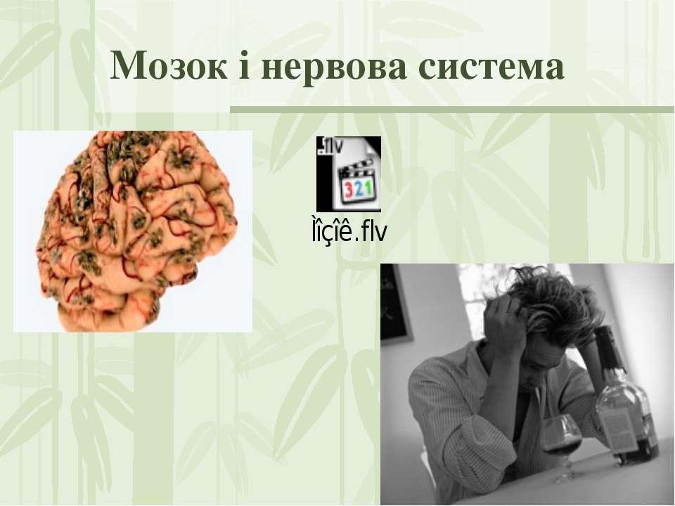 Мозок і нервова система