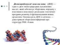 Дезоксирибонуклеї нова кислота (ДНК)— один із двох типів природнихнуклеїно...