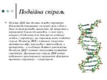 Подвійна спіраль Полімер ДНК має досить складну структуру. Нуклеотиди ковален...