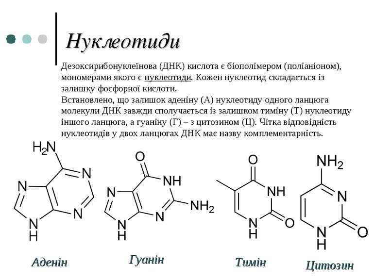 Нуклеотиди Аденін Гуанін Тимін Цитозин Дезоксирибонуклеїнова (ДНК) кислота є ...