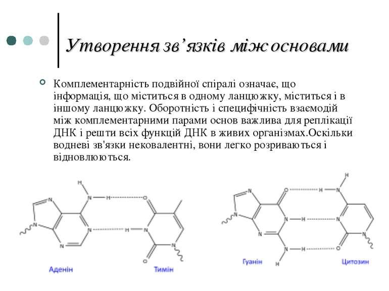 Утворення зв'язків між основами Комплементарність подвійної спіралі означає, ...