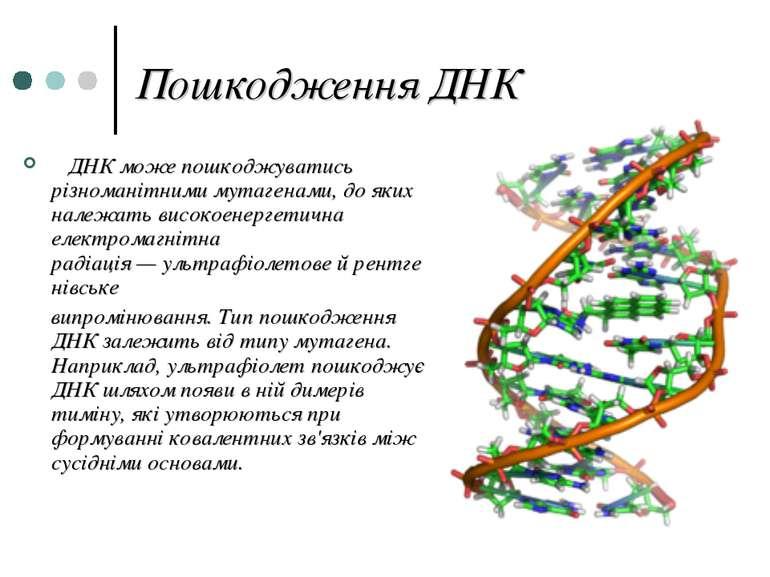 Пошкодження ДНК ДНК може пошкоджуватись різноманітнимимутагенами, до яких на...